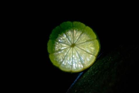 75 Frutta-StellAntonio 002